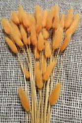 DMUSZEK JAJOWATY KOLOR JASNOPOMARAŃCZOWY ~35 szt.  (Lagurus ovatus) ozdobna trawa suszona