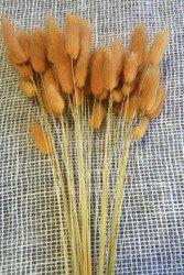 DMUSZEK JAJOWATY KOLOR POMARAŃCZOWY ~35 szt.  (Lagurus ovatus) ozdobna trawa suszona