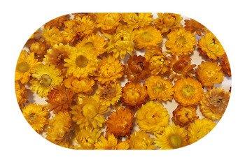 KOCANKA SUSZONA MIX ŻÓŁTY (suchołuska, nieśmiertelnik, Helichrysum) kwiaty suszone suszki dekoracyjne