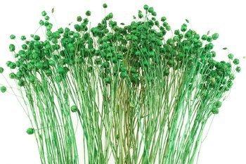 LEN KOLOR CIEMNOZIELONY suszony barwiony dodatek florystyczny pęczek 45-50 cm susz krajowy