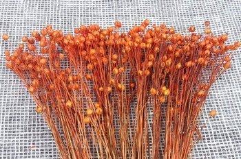 LEN KOLOR JASNOPOMARAŃCZOWY 1 suszony barwiony dodatek florystyczny pęczek 45-50 cm