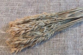 OWIES KOLOR NATURALNY zboże suszone niebarwione kłosy zbóż