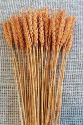 PSZENICA KOLOR POMARAŃCZOWY zboże suszone barwione pęczek 50 cm
