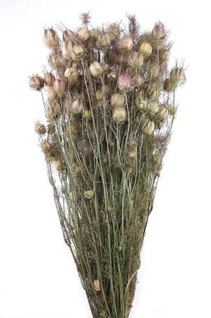 CZARNUSZKA DAMASCEŃSKA KOLOR NATURALNY pęk XL (Nigella damascena) suszki dekoracyjne kwiaty na suche bukiety