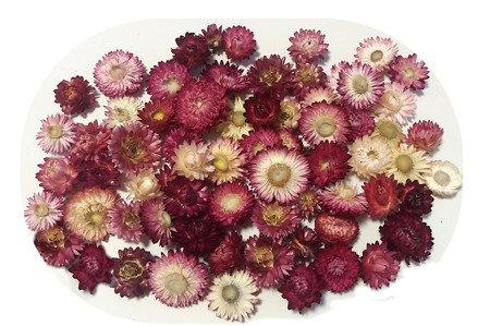 KOCANKA SUSZONA MIX RÓŻOWY (suchołuska, nieśmiertelnik, Helichrysum) kwiaty suszone suszki dekoracyjne