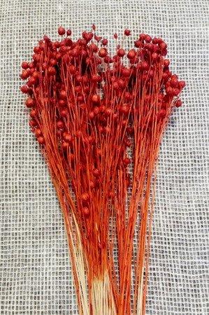 LEN KOLOR CZERWONY XL suszony barwiony dodatek do stroików i bukietów