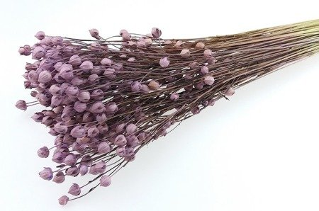 LEN KOLOR WRZOSOWY pęczek XL 100 g suszony barwiony dodatek do stroików i bukietów