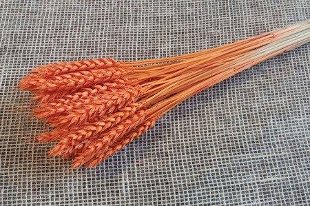 PSZENICA KOLOR JASKRAWOPOMARAŃCZOWY zboże suszone barwione pęczek 45 cm