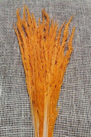 TRAWA LEŚNA KOLOR JASNOPOMARAŃCZOWY trawa suszona barwiona