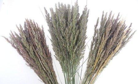 TRAWA LEŚNA KOLOR NATURALNY trawa suszona niebarwiona