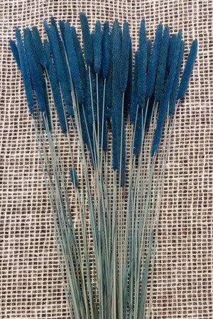 TYMOTKA ŁAKOWA KOLOR NIEBIESKI Phleum pratense (brzanka pastewna) ozdobna trawa suszona