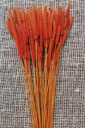 TYMOTKA ŁĄKOWA KOLOR POMARAŃCZOWY Phleum pratense (brzanka pastewna) ozdobna trawa suszona