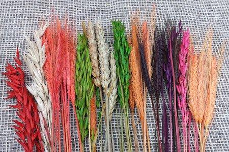 ZBOŻE MIX wielobarwny zestaw różnych zbóż